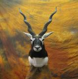 images/africa_game/taxidermy_02.jpg