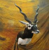 images/africa_game/taxidermy_03.jpg