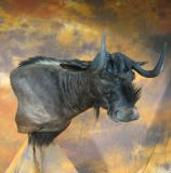 images/africa_game/taxidermy_04.jpg