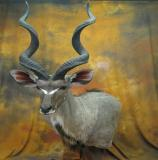 images/africa_game/taxidermy_11.jpg