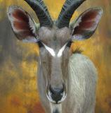 images/africa_game/taxidermy_12.jpg