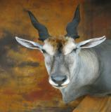 images/africa_game/taxidermy_14.jpg
