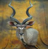 images/exotics/taxidermy_13.jpg