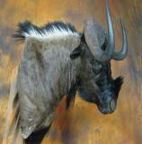 images/exotics/taxidermy_16.jpg
