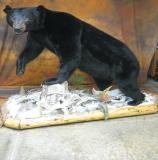 images/north_american_big_game/17taxidermy_02.jpg