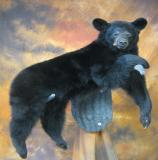 images/north_american_big_game/17taxidermy_06.jpg