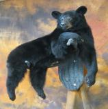 images/north_american_big_game/17taxidermy_07.jpg