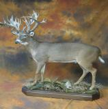 images/north_american_big_game/17taxidermy_12.jpg