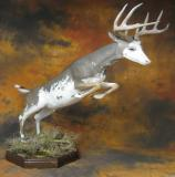 images/north_american_big_game/17taxidermy_13.jpg