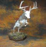 images/north_american_big_game/17taxidermy_14.jpg