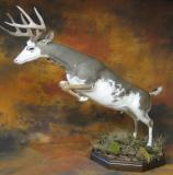 images/north_american_big_game/17taxidermy_15.jpg