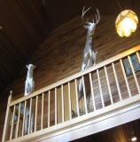images/north_american_big_game/17taxidermy_20.jpg