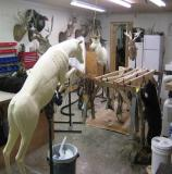 images/north_american_big_game/17taxidermy_22.jpg