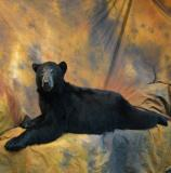 images/north_american_big_game/taxidermy_01.jpg