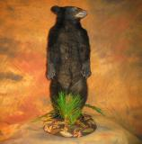 images/north_american_big_game/taxidermy_03.jpg