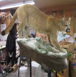images/north_american_big_game/taxidermy_08.jpg