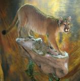 images/north_american_big_game/taxidermy_10.jpg