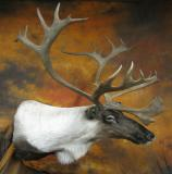 images/north_american_big_game/taxidermy_16.jpg