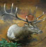 images/north_american_big_game/taxidermy_17.jpg