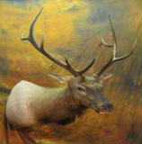 images/north_american_big_game/taxidermy_20.jpg
