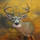 images/north_american_big_game/taxidermy_21.jpg