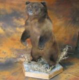 images/north_american_big_game/taxidermy_23.jpg