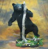 images/north_american_big_game/taxidermy_26.jpg