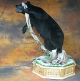 images/north_american_big_game/taxidermy_34.jpg