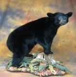 images/north_american_big_game/taxidermy_43.jpg