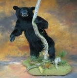 images/north_american_big_game/taxidermy_45.jpg