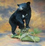 images/north_american_big_game/taxidermy_46.jpg