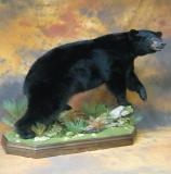 images/north_american_big_game/taxidermy_50.jpg